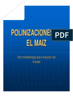 Polinizacion Maiz