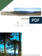 El Bosque Pehuen de Alto Palguin, Villarrica