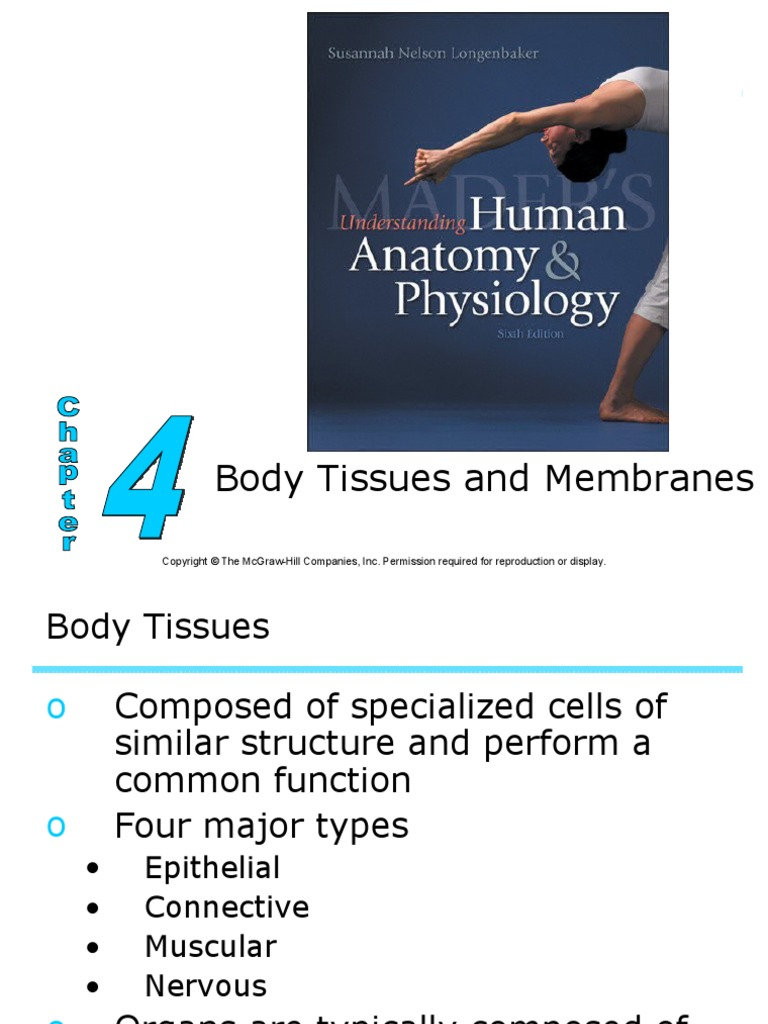 Body Tissues and Membranes | Epithelium | Tissue (Biology)