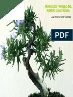 Romero - Formación y manejo como bonsai