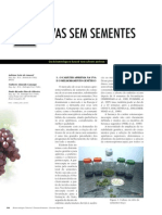 Uvas Sem Sementes - Biotecnologia