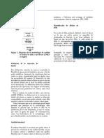 DEFINICION DE LA INT. DE DISEÑO
