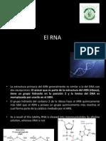 El RNA