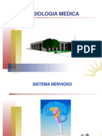 Uat Sistema Nervioso