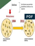 Mutación - Variabilidad