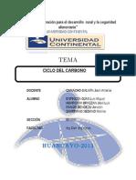 Informe de Ciclo Del Carbono