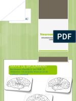 Presentacion de Neuroanatomia