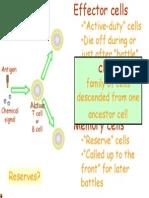 Sel Imunisasi Aktiviti