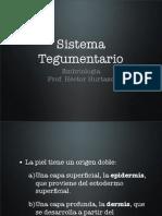 (19) Sistema Tegumentario