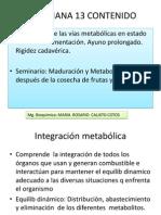 SEMANA-13-integración-2013- bioquimica