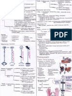 Neuropati 1