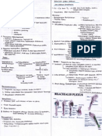 Neuropati 3 + Pleksus