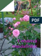 Trandafirii pentru incepatori