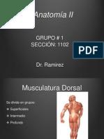 Anatomía II expo