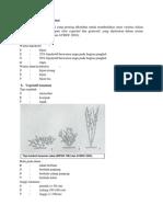 Produksi benih cabai.docx