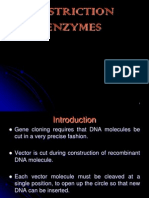 Restriction Enzyme