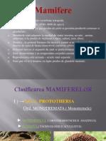 mamifere-prezentare ppt. clasa a XI-a