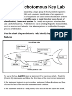 Shark Dichotomous Key Lab