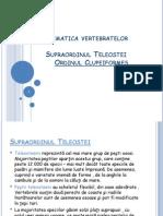 Proiect Vertebrate ordinul clupeiformes