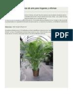 10 Plantas Purificadoras de Aire Para Hogares y Oficinas