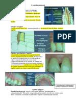 2 - Anatomia Do Periodonto I