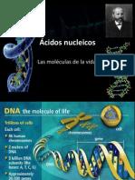 Ácidos núcleicos