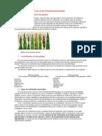 Diagnostico Visual de Las Plantas
