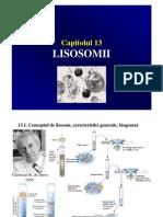 C10 Lisosomi peroxisomi