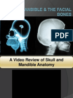 104 Skull, Mandible & the Facial Bones.ppt