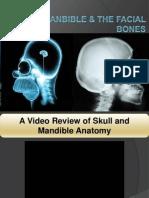 104 Skull, Mandible & the Facial Bones.ppt