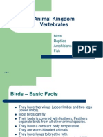 Vertebrates Birds, Reptiles, Amphibians, Fish
