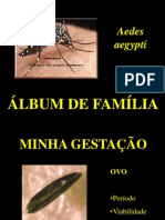 Ciclo do Mosquito da Dengue