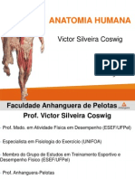 Anatomia 1