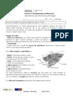 Ficha de trabalho 8 Estudo dos órgãos da videira Folha