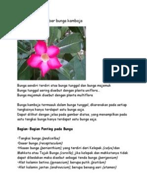 Menakjubkan 30 Contoh Lukisan Bunga Kamboja Rudi Gambar