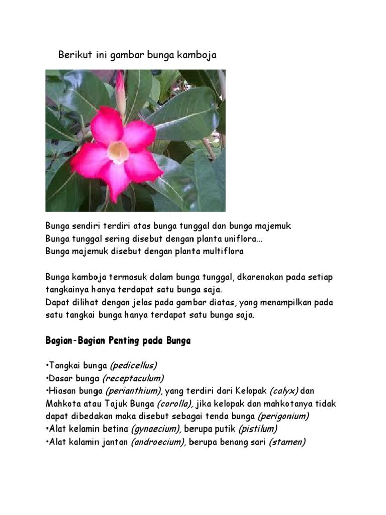 Unduh 660+ Gambar Bunga Majemuk Dan Bunga Tunggal HD Paling Keren