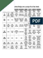 Tabela Comparativa Filos Do Reino Animalia