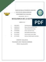 GOTA Informe