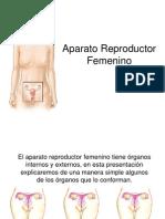 Reproductor Femenino