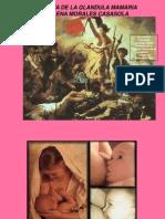 26 Clase Mama HISTOLOGIA de la glandula mamaria