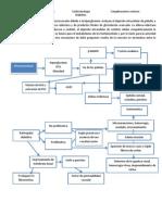 complicaciones microvasculares