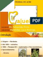 Cultura Do Caju