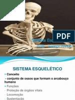 02 SISTEMA ESQUELÉTICO 2014.ppt
