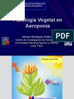 Fisiología vegetal en aeroponía
