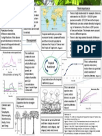 Processes of tropical rainforest