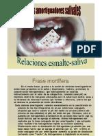 4._Amortiguadores_salivales