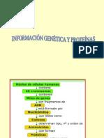 Descubrimiento del ADN-2013 1º clase