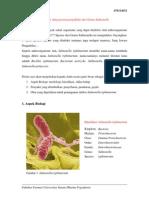 Salmonella Typhimurium1