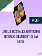 lobulos_frontales