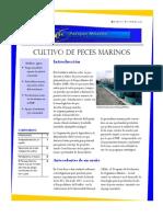 Boletin Cultivo Peces Marinos Enero 11